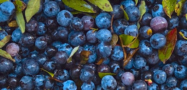 Wild blueberries HP